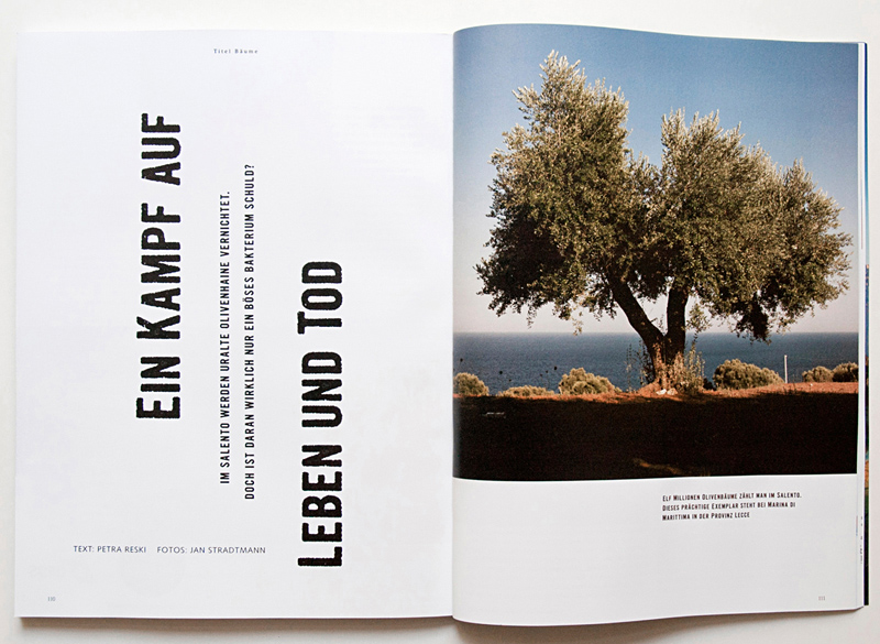 Mare Magazin Trees